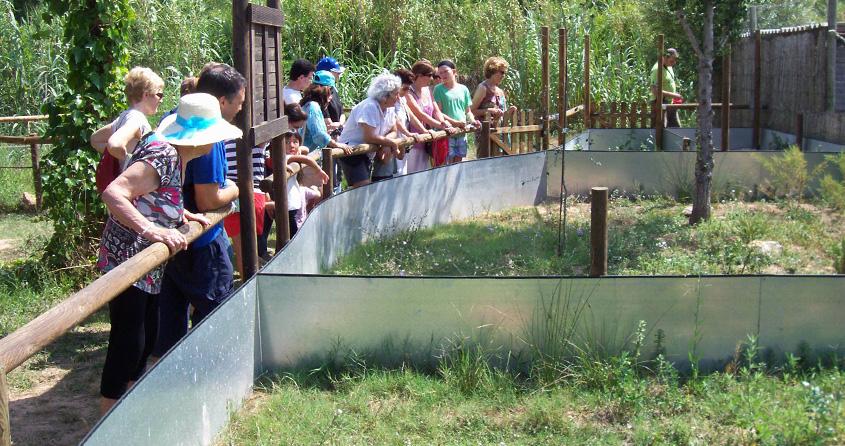 Visitants al centre de divulgació de la tortuga